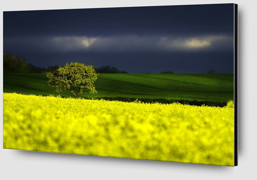 The yellow field from Pierre Gaultier Zoom Alu Dibond Image
