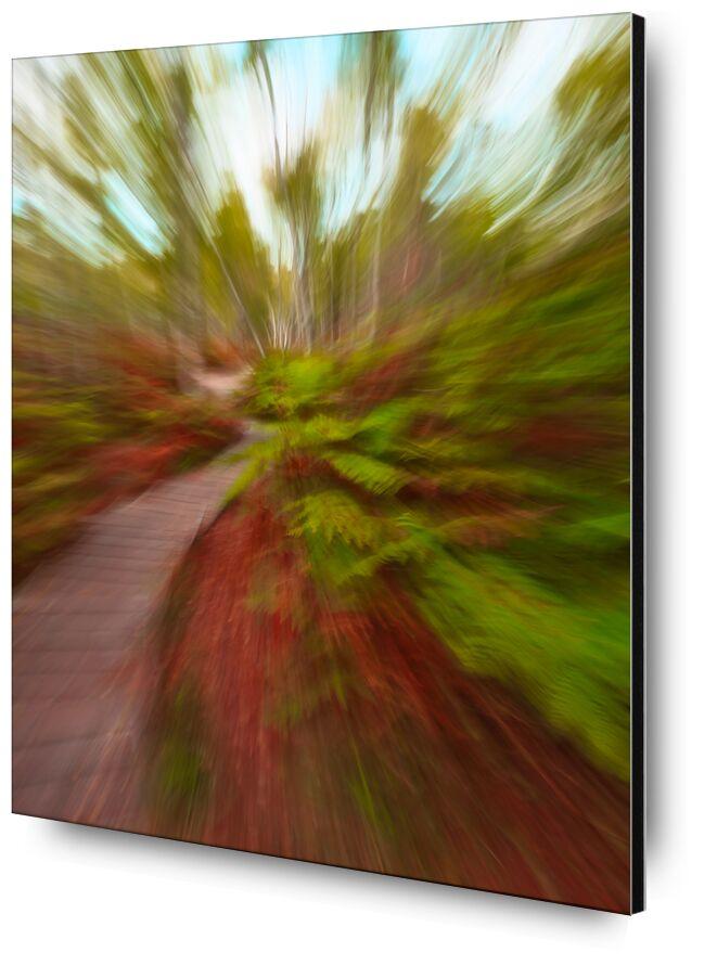 L'escalier en forêt de Céline Pivoine Eyes, Prodi Art, automne, Fontainebleau, escalier, bois, forêt, Photographie abstraite, art abstrait, flou artistique, Mouvement intentionnel de la caméra, ICM