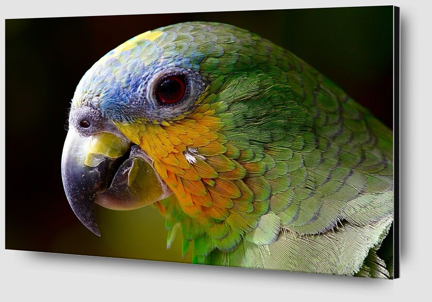 Parrot of the islands from Pierre Gaultier Zoom Alu Dibond Image