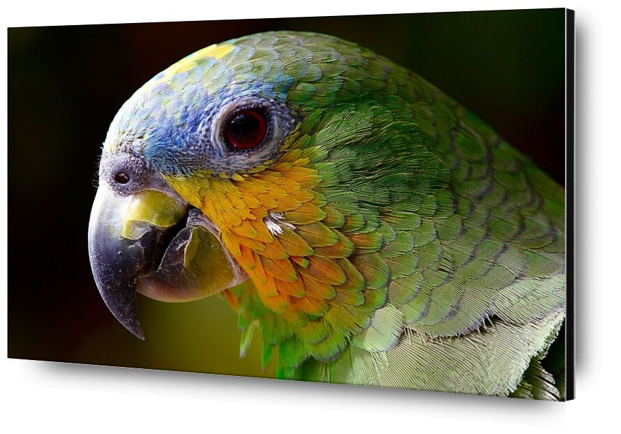 Parrot of the islands from Pierre Gaultier, Prodi Art, parrot, animals, bird, green, wings, animal, nature, peak, plumage, color, pen, amazon, exotic bird, tropical bird, ave, jungle, macaw