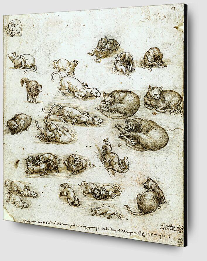 Des chats, des Lions et un Dragon - Léonard de Vinci de AUX BEAUX-ARTS Zoom Alu Dibond Image