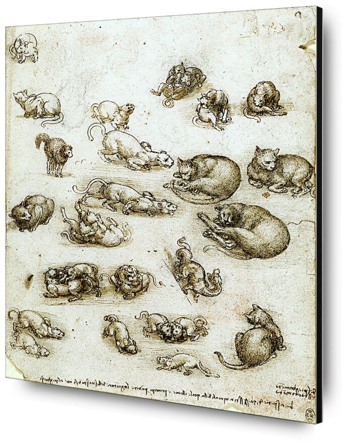 Cats, Lions, and a Dragon - Leonardo da Vinci desde AUX BEAUX-ARTS, Prodi Art, continuar, gato, león, animales, dibujo a lápiz, dibujo, Leonardo da Vinci