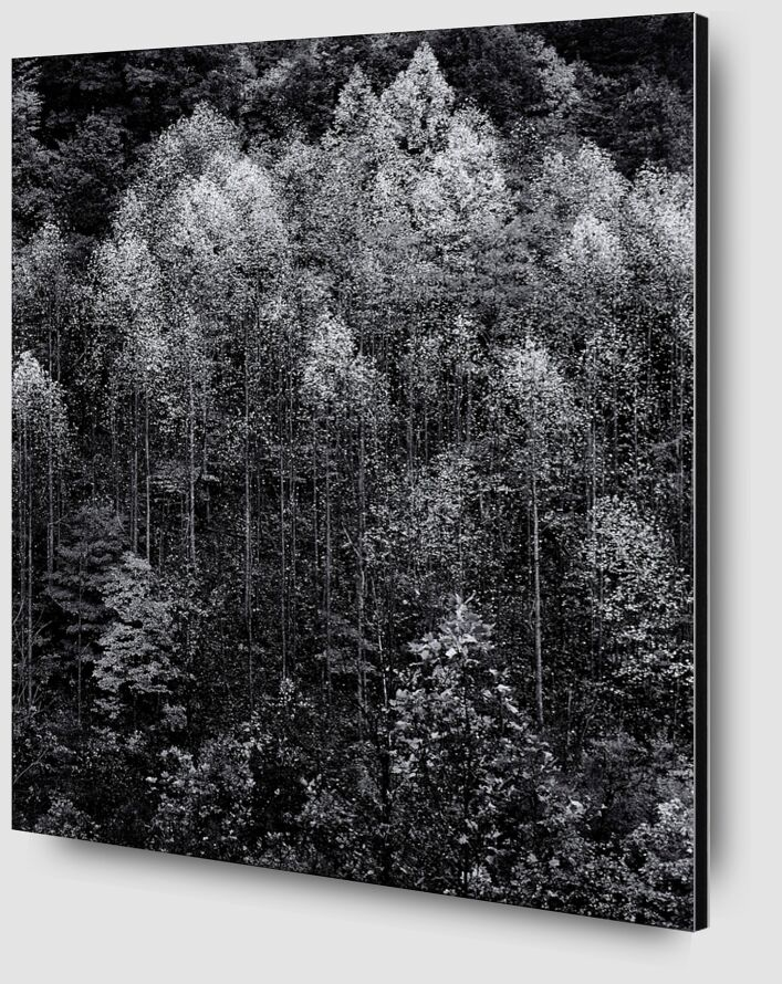 Dawn, Autumn, Great Smoky Mountains National Park, Tennessee - Ansel Adams desde AUX BEAUX-ARTS Zoom Alu Dibond Image