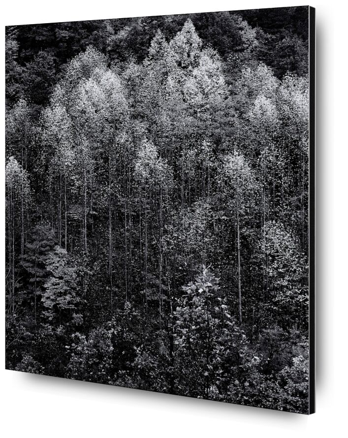 Dawn, Autumn, Great Smoky Mountains National Park, Tennessee - Ansel Adams from AUX BEAUX-ARTS, Prodi Art, ANSEL ADAMS, dawn, snow, winter, forest, trees, Autonomous