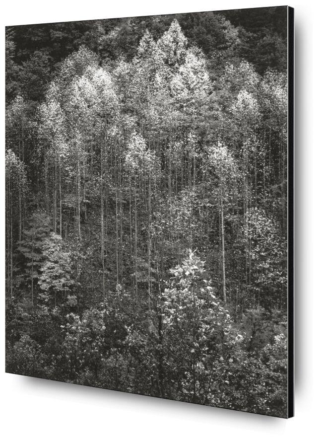 Dawn, Autumn, Great Smoky Mountains National Park, Tennessee - Ansel Adams desde AUX BEAUX-ARTS, Prodi Art, ANSEL ADAMS, amanecer, nieve, invierno, bosque, árboles, Autónomo