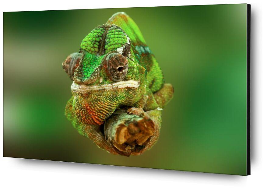 Le caméléon de Pierre Gaultier, Prodi Art, gros plan, coloré, coloré, vert, lézard, reptile, chamaeleonidae, caméléon