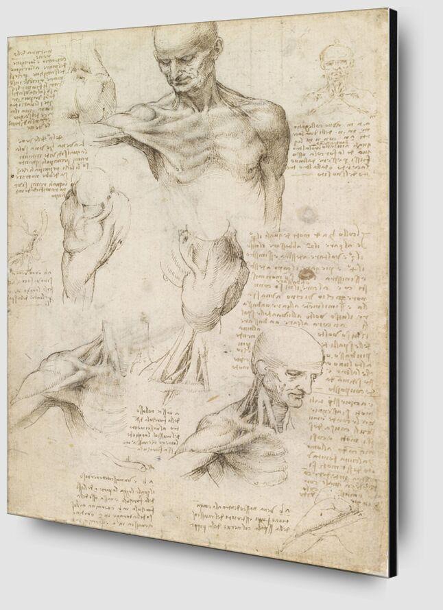 Anatomie superficielle de l'épaule et du cou (recto) - Léonard de Vinci de AUX BEAUX-ARTS Zoom Alu Dibond Image
