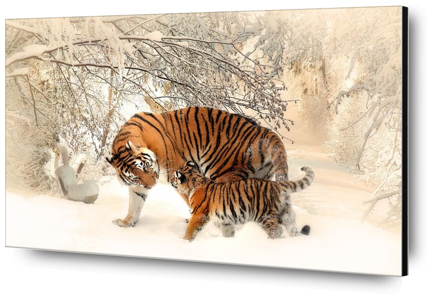 Tigers in the snow from Pierre Gaultier, Prodi Art, tiger, young, forest, winter, mood, play, beautiful, tiger baby, tigerfamile, family, panthera tigris altaica, young animal, wilderness, outdoor