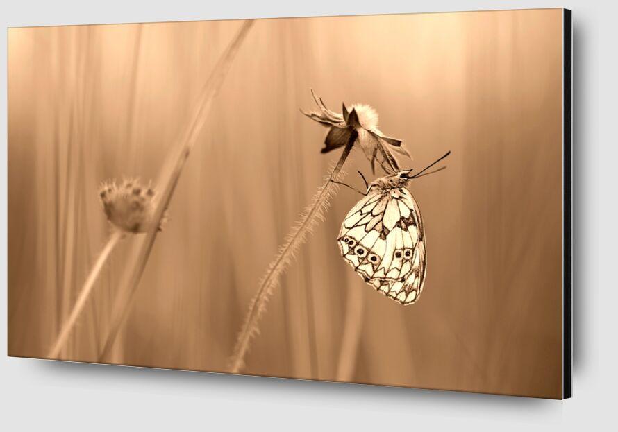 Serenity de Romain DOUCELIN Zoom Alu Dibond Image