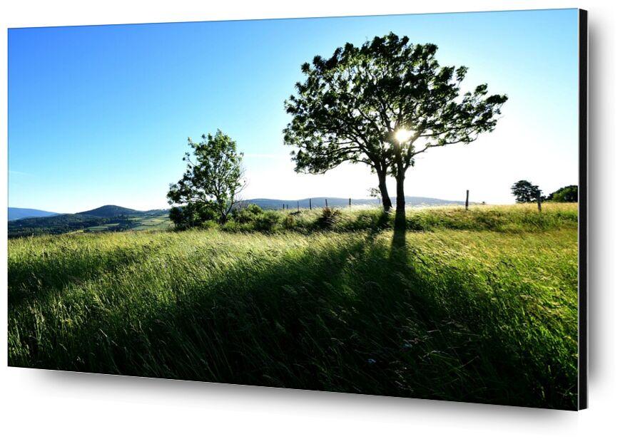 Campagne de Romain DOUCELIN, Prodi Art, champs, soleil, coucher du soleil, été, printemps, campagne, forêt, arbre, flore, environnement, nature, Paysages, paysage, parc du mont pilat, loire