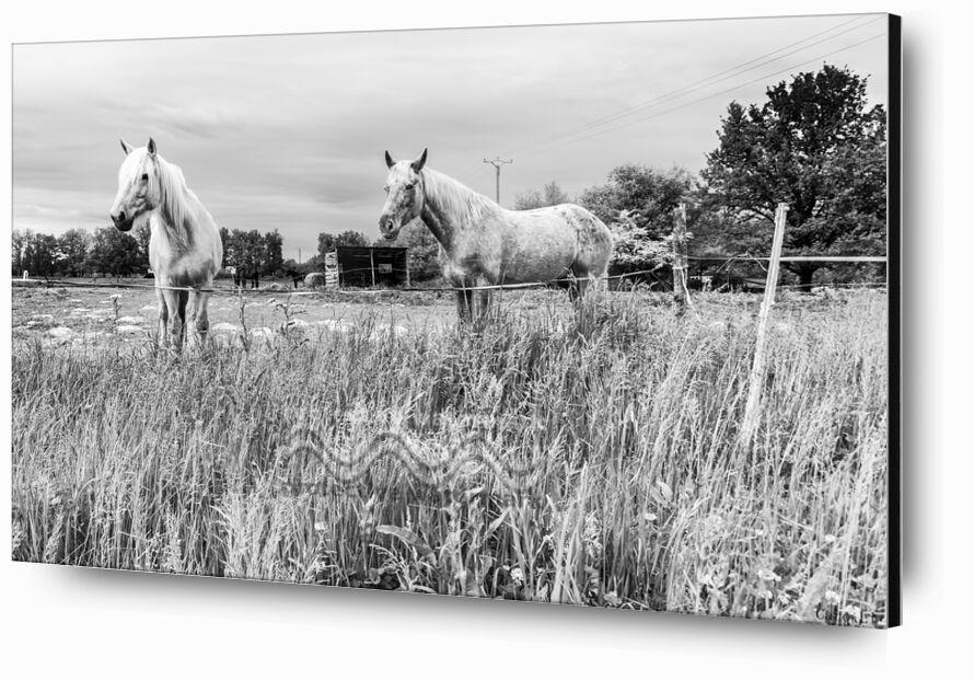 Les cheveaux de Caro Li, Prodi Art, chevaux, chevaux, prairie, paysage, paysage, nature, Cher Li, Photographie, toulouse, photographie d'art