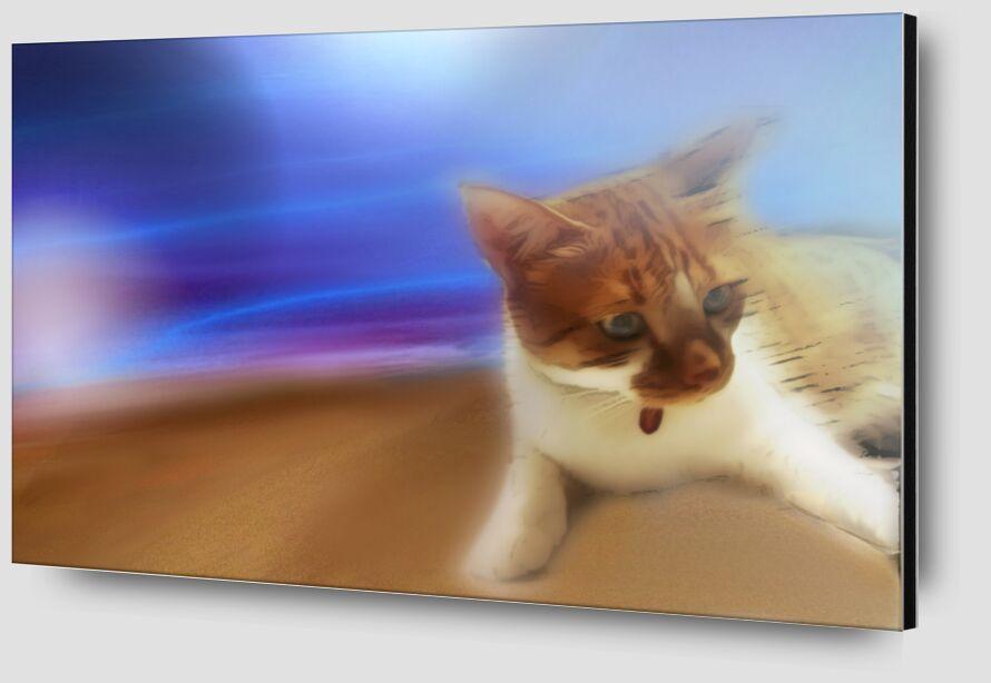 The cat from Adam da Silva Zoom Alu Dibond Image