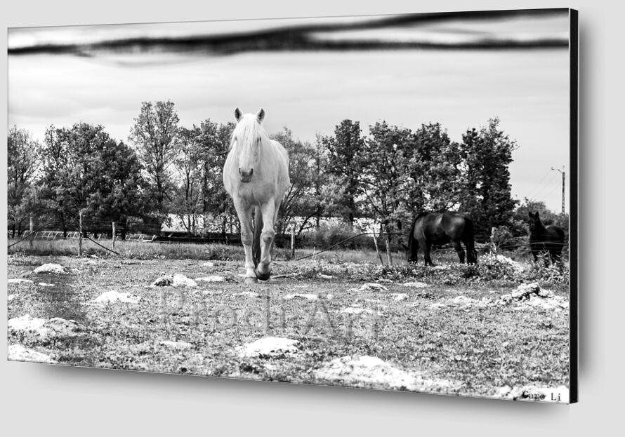 Le cheval de Caro Li Zoom Alu Dibond Image