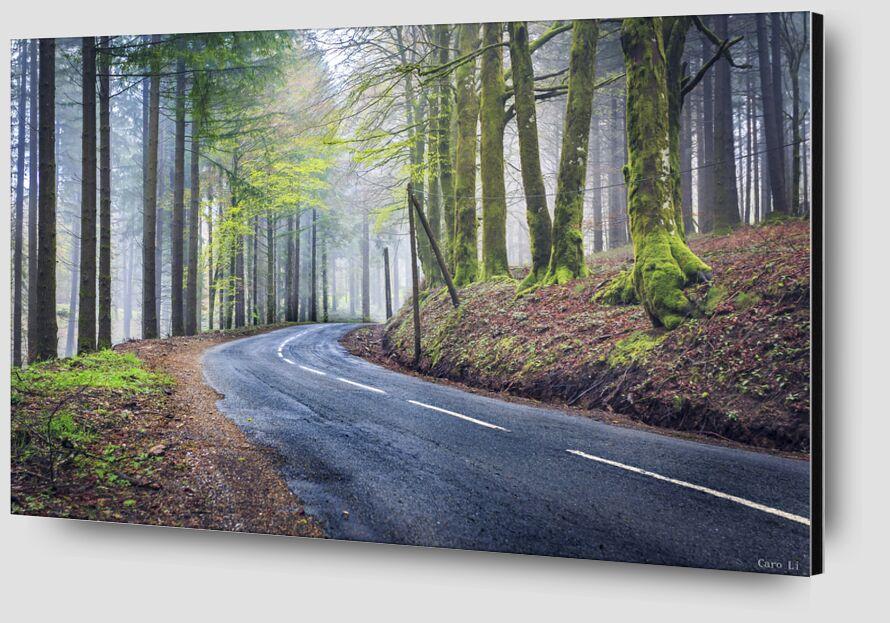 The way from Caro Li Zoom Alu Dibond Image