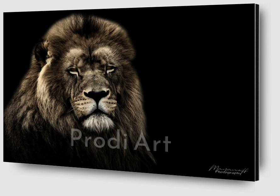 Le Roi de la savane de Mayanoff Photography Zoom Alu Dibond Image