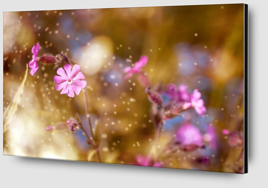 Flowers in the wind from Pierre Gaultier Zoom Alu Dibond Image