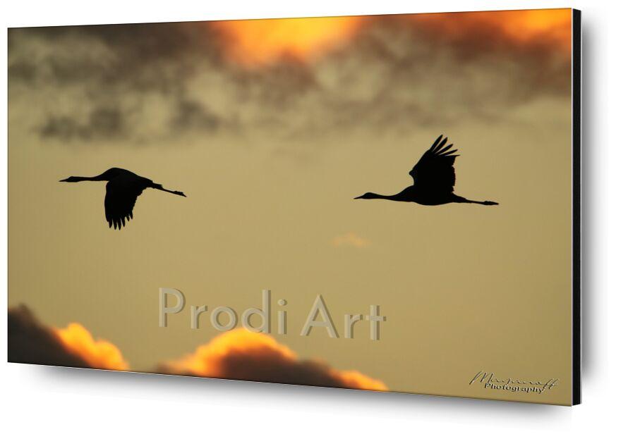 Envol matinal de Mayanoff Photography, Prodi Art, aurore, nuages, envol, matin, oiseaux, vol, nuages, Aube, matin, des oiseaux, grues, des silhouettes, grues