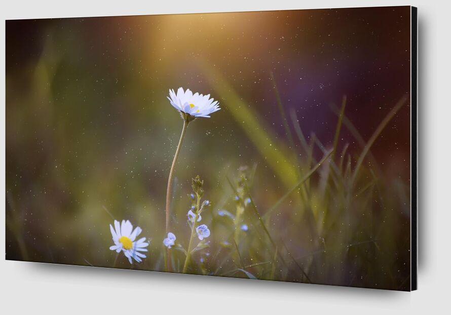 Sunshine from Pierre Gaultier Zoom Alu Dibond Image