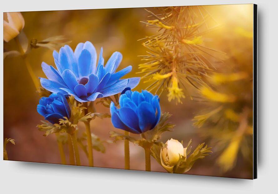 Wild flower from Pierre Gaultier Zoom Alu Dibond Image