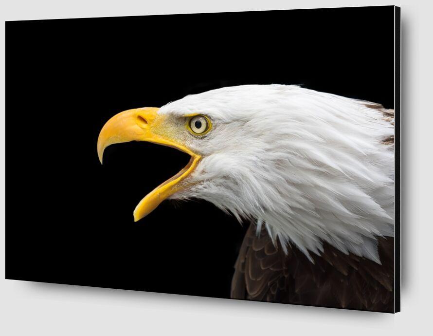 Beak of the Eagle from Pierre Gaultier Zoom Alu Dibond Image