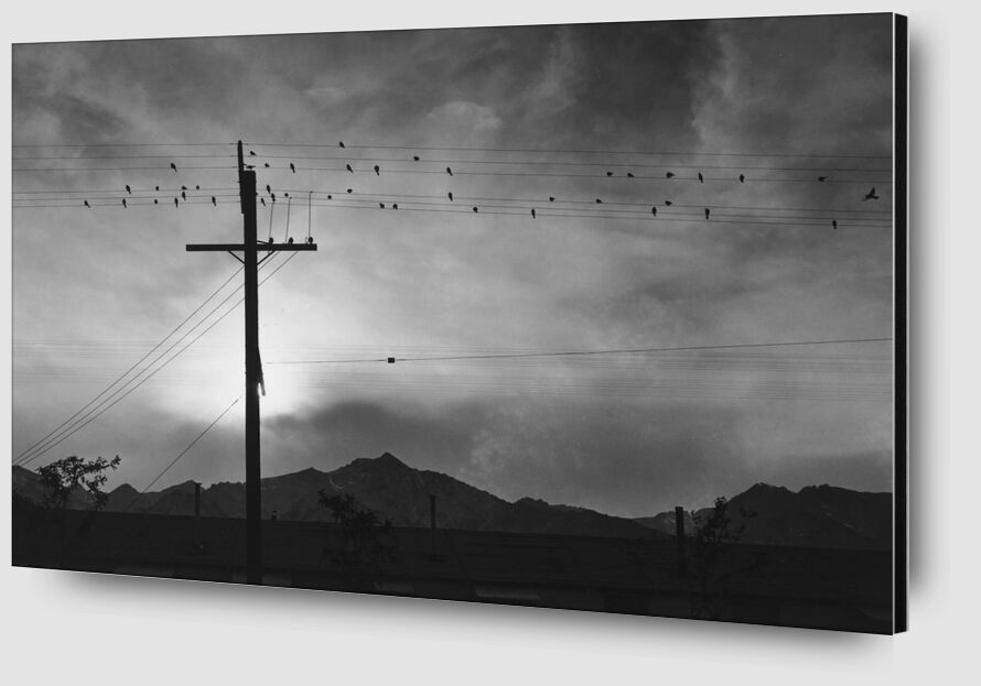Birds on Wire, Evening - Ansel Adams from AUX BEAUX-ARTS Zoom Alu Dibond Image