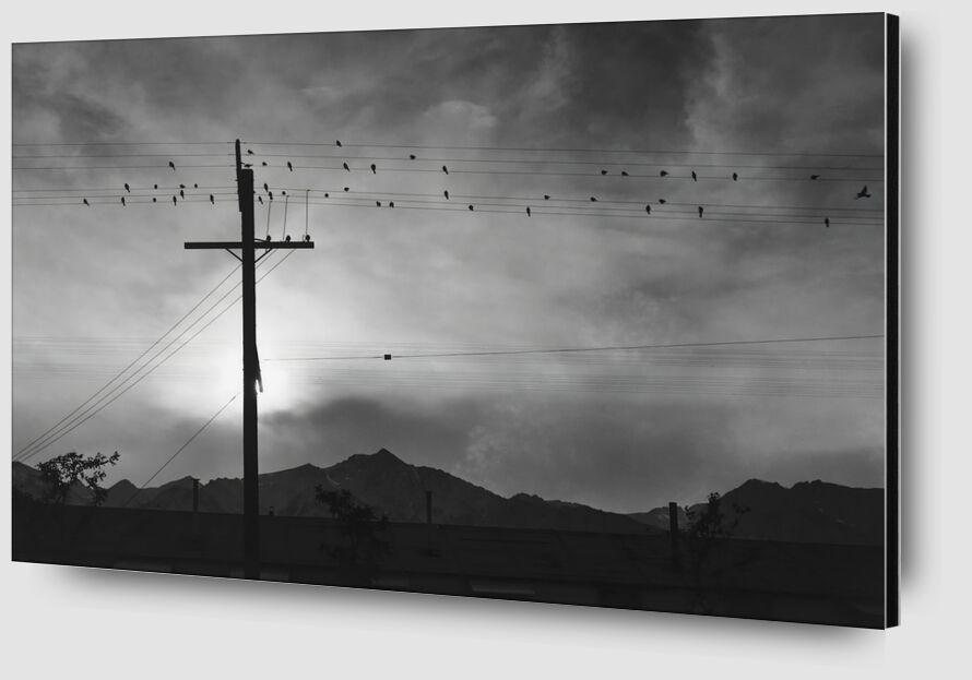 Birds on Wire, Evening - Ansel Adams desde AUX BEAUX-ARTS Zoom Alu Dibond Image