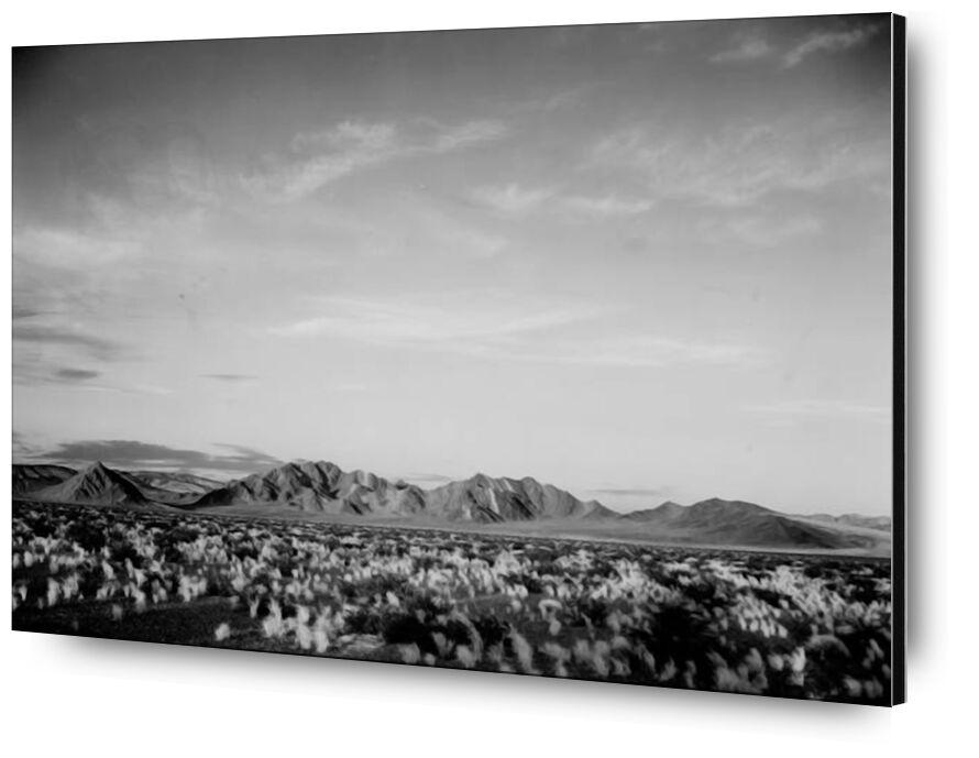 View Of Montains Desert Shrubs Highlighted - Ansel Adams desde AUX BEAUX-ARTS, Prodi Art, ANSEL ADAMS, blanco y negro, montañas, arbustos