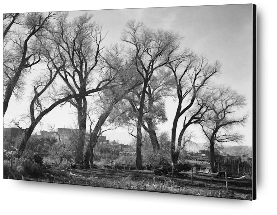 At Taos Pueblo National Historic Landmark - Ansel Adams from AUX BEAUX-ARTS, Prodi Art, ANSEL ADAMS, black-and-white, trees, farm