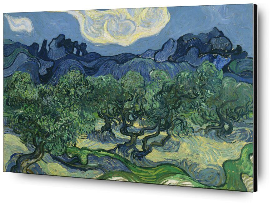 The Olive Trees - Van Gogh desde AUX BEAUX-ARTS, Prodi Art, abstracto, Van gogh, campos, naturaleza, Olivos
