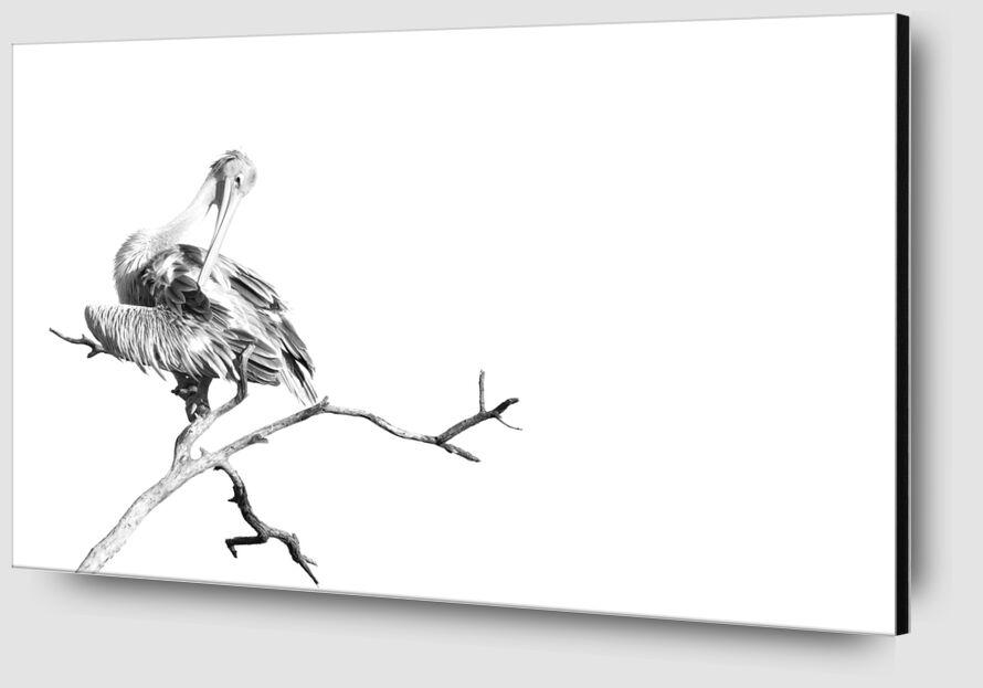 Pelican gris en noir & blanc 1 de Emilie Tournier Zoom Alu Dibond Image
