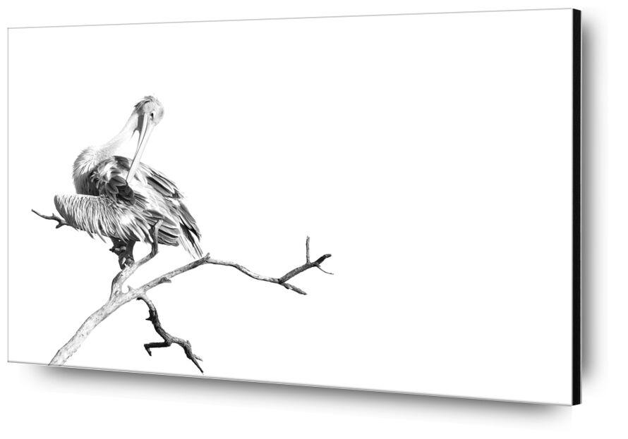 Pelican gris en noir & blanc 1 de Emilie Tournier, Prodi Art, Afrique, des oiseaux, noir et blanc, animal, Botswana, Kalahari, Parc national de Makgadigadi, Oiseau Pelecanus rufescens, Pélican à dos rose, Pélican gris, désert du Kalahari, high-key, pélican, surexposition