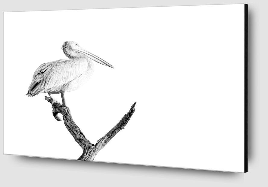 Pelican gris en noir & blanc 2 de Emilie Tournier Zoom Alu Dibond Image