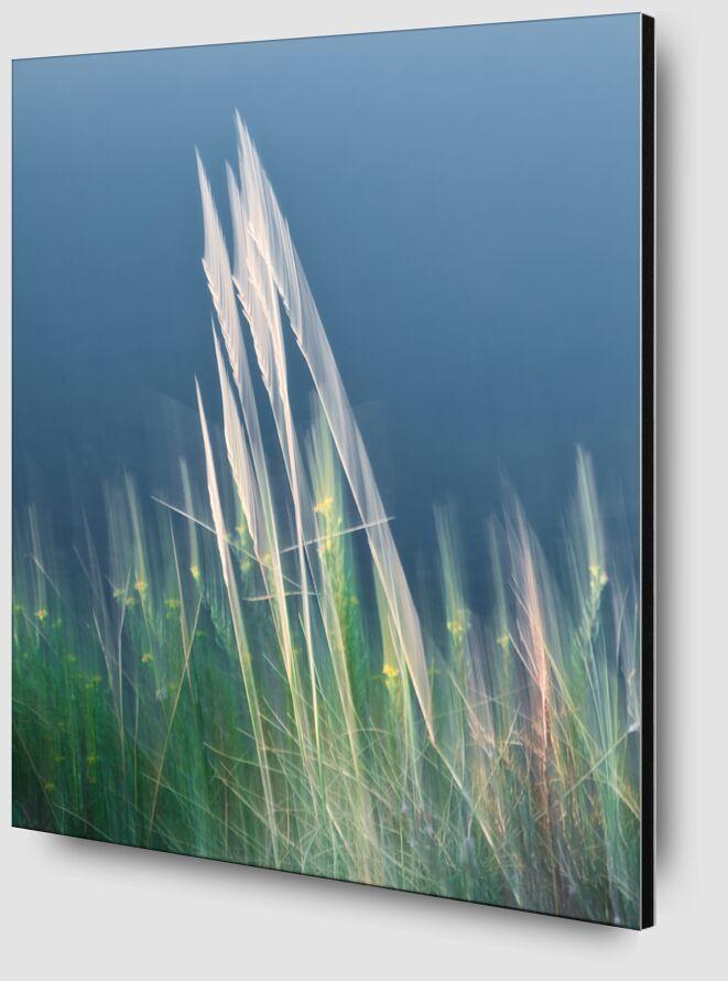 Brin d'herbe folle de Céline Pivoine Eyes Zoom Alu Dibond Image