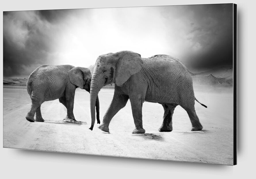 Two elephants from Pierre Gaultier Zoom Alu Dibond Image