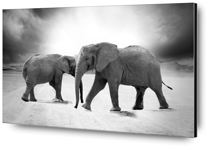 Two elephants from Pierre Gaultier, Prodi Art, elephant, ivory, animals, africa, predator, safari, zoo, nature, limpopo