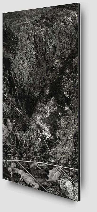UNDER YOUR SKIN 9 from jean michel RENAUDIN Zoom Alu Dibond Image