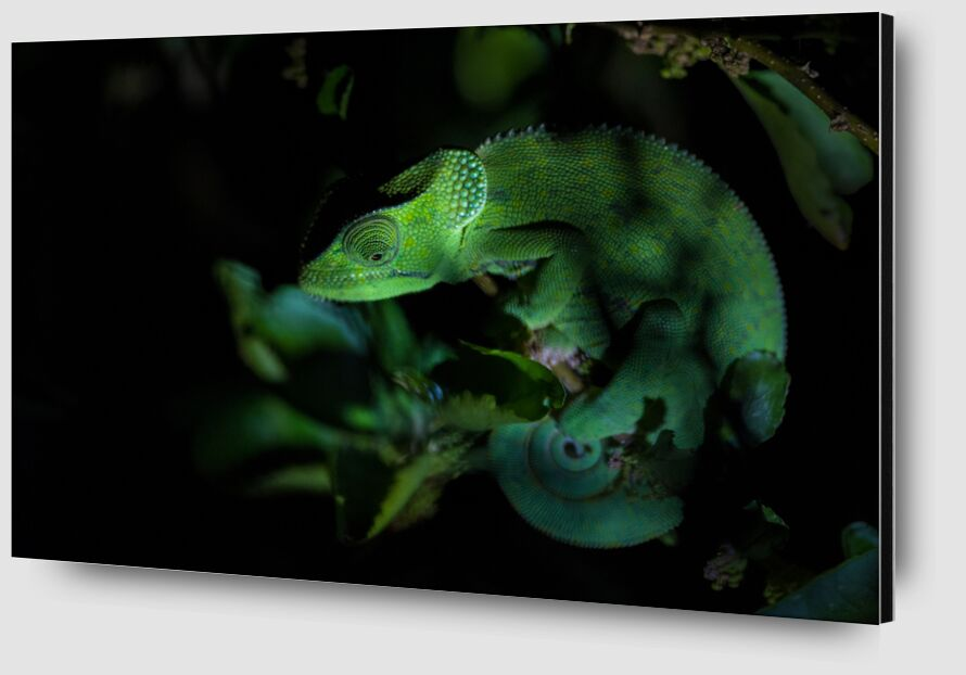 Vert de nuit de Emilie Tournier Zoom Alu Dibond Image
