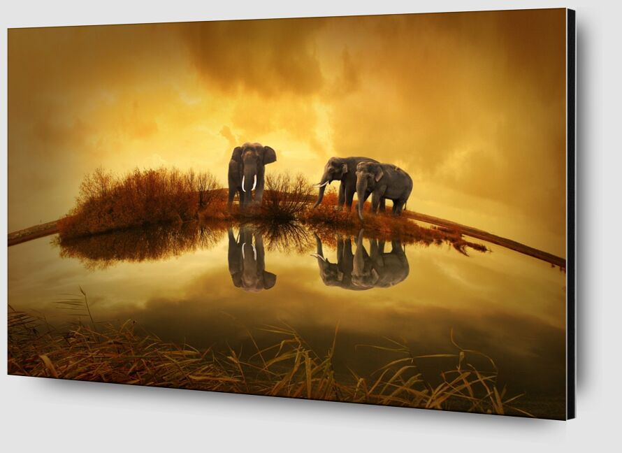 Elephants at the water's edge from Pierre Gaultier Zoom Alu Dibond Image