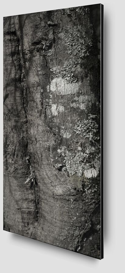 SOUS TA PEAU 3 de jean michel RENAUDIN Zoom Alu Dibond Image