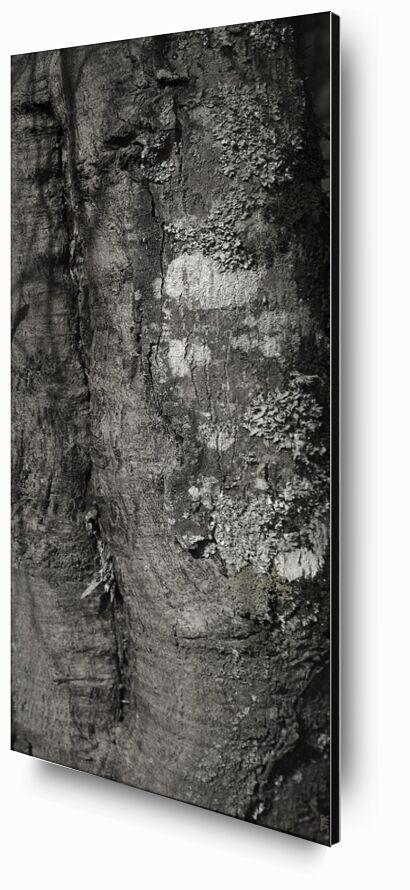 SOUS TA PEAU 3 de jean michel RENAUDIN, Prodi Art, Matériel, Lierre, tronc, forêt, arbre, matière, vivante, vivant, écorce