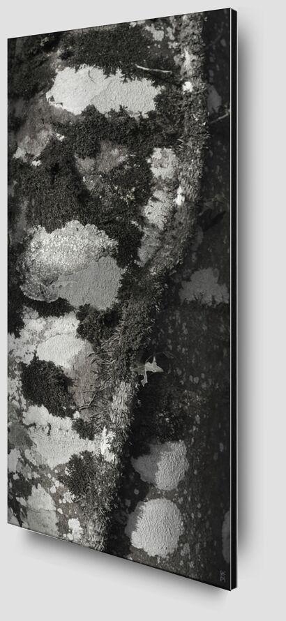UNDER YOUR SKIN 4 from jean michel RENAUDIN Zoom Alu Dibond Image