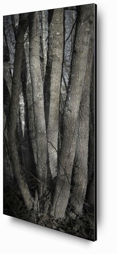 SOUS TA PEAU 1 de jean michel RENAUDIN, Prodi Art, Matériel, Lierre, tronc, forêt, arbre, matière, vivante, vivant, écorce