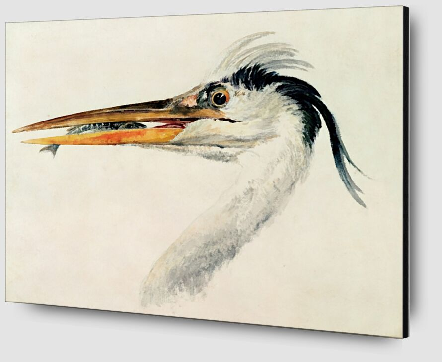 Heron with a Fish - TURNER from AUX BEAUX-ARTS Zoom Alu Dibond Image