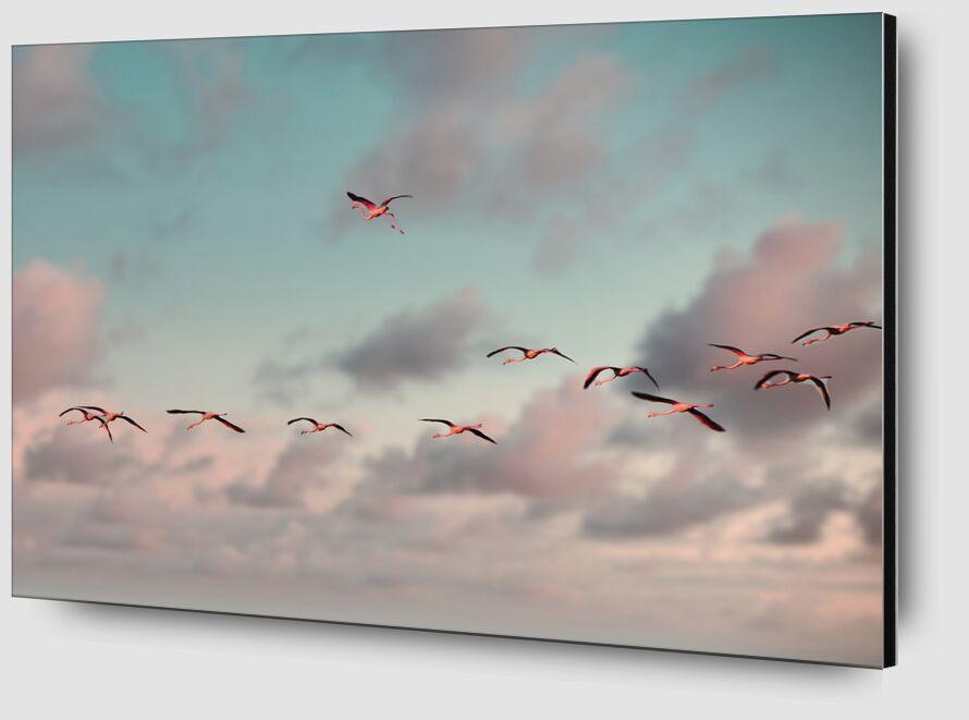 L'envolée de flamants roses de Céline Pivoine Eyes Zoom Alu Dibond Image
