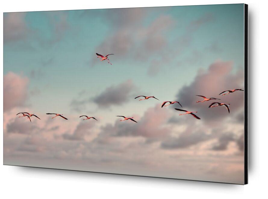 L'envolée de flamants roses de Céline Pivoine Eyes, Prodi Art, lever de soleil, lever du soleil, Aube, oiseaux, ciel, flamants roses, Nuage rose, Ciel nuageux rose