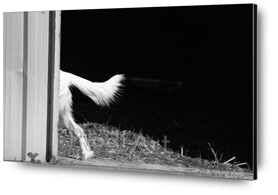 Follow Me from Audrey Clémentine Conilh Anderson, Prodi Art, countryside, dog, animal, animals, dordogne, gironde, west, South, aquitaine, France