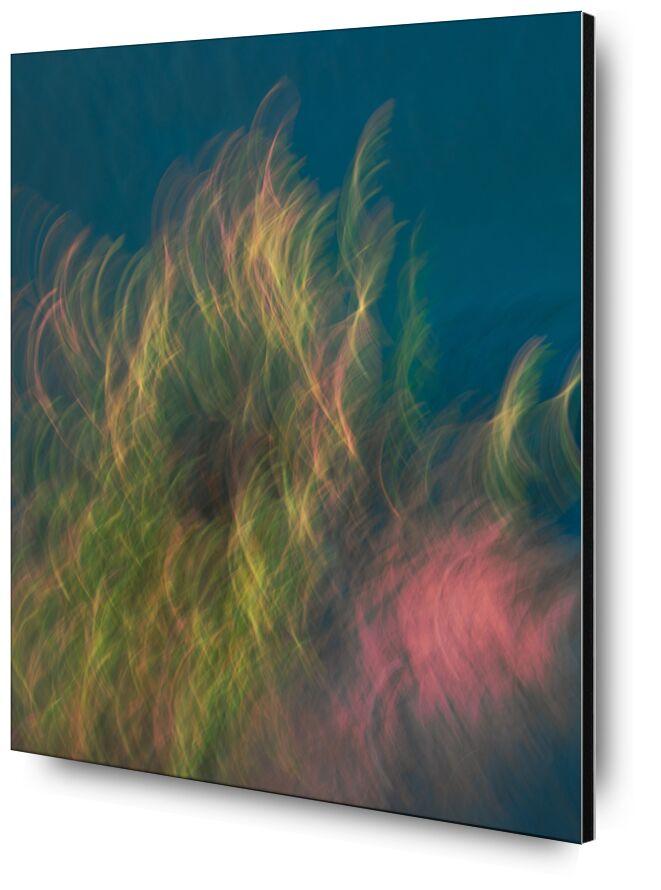 Le buisson de Céline Pivoine Eyes, Prodi Art, marais, nature, Photographie abstraite, art abstrait, art deco, ICM, Mouvement intentionnel de la caméra, paysage, fleurs, plante, couleurs, buisson