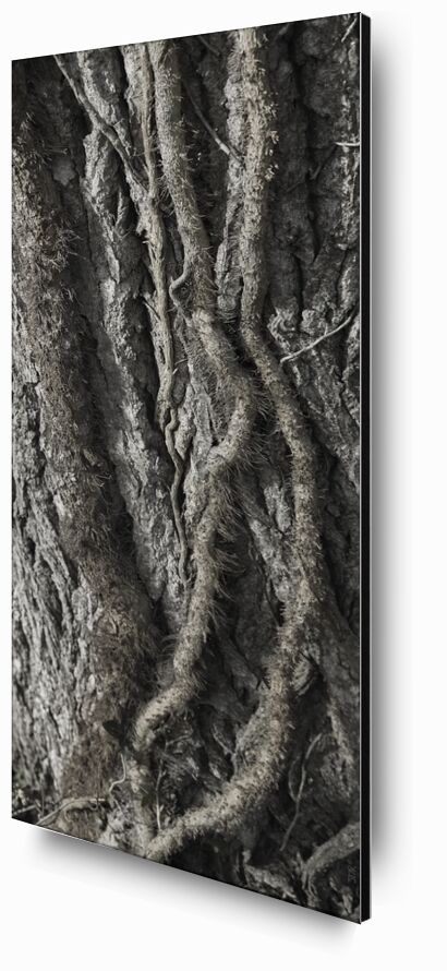 UNDER YOUR SKIN 11 from jean michel RENAUDIN, Prodi Art, tree, matter, alive, living, bark, Ivy, trunk, forest, tree, material, alive, bark, Ivy, trunk, forest