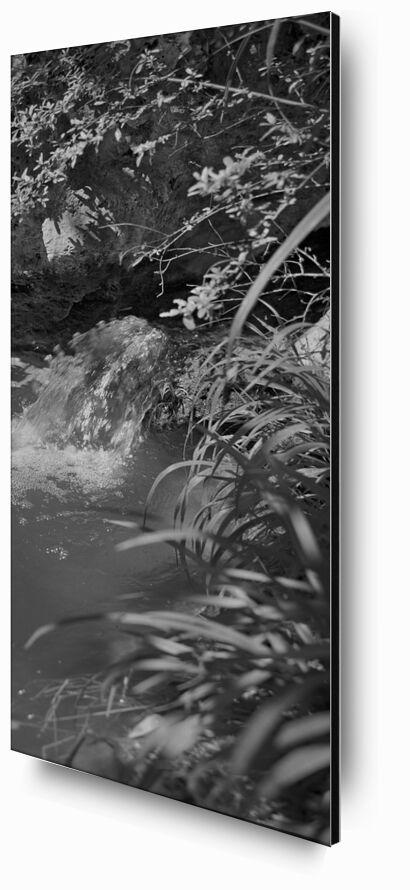 La montagne est dans mon jardin 2 de jean michel RENAUDIN, Prodi Art, herbes sauvages, plante, écologie, herbes, jardin, jardin, sauvage, herbes folles, légume, écologie, herbes, nature