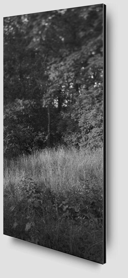 La montagne est dans mon jardin 9 de jean michel RENAUDIN Zoom Alu Dibond Image